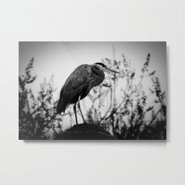 Heron Metal Print