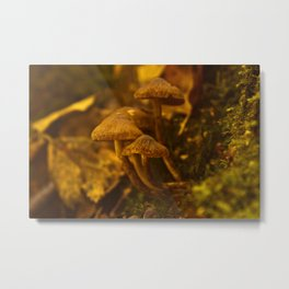From The Forest Metal Print