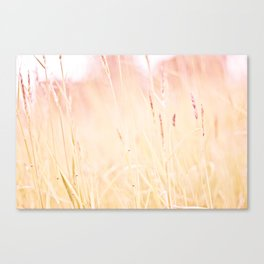 This is pink Canvas Print