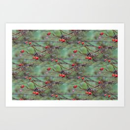 Small rosehips on bare branches Art Print