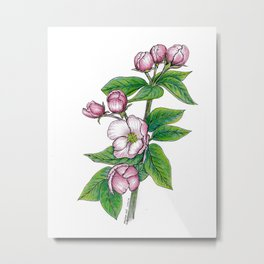 Apple Blossoms, floral art, flower drawing, pink spring flowers on white background Metal Print