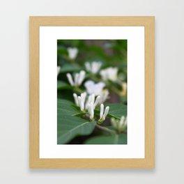 Arboretum 2 Framed Art Print