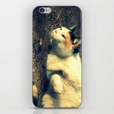 Tabby iPhone & iPod Skin