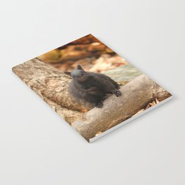 Do you love me Notebook