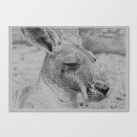 kangaroo Canvas Prints featuring Kangaroo by Beau skarp