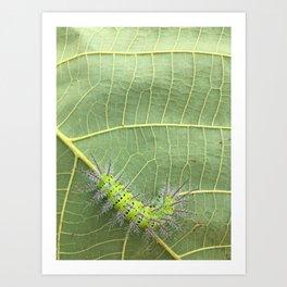 My green friend.  Art Print