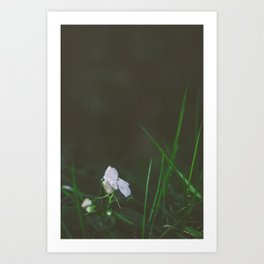 Lonely Flowers 02 Art Print