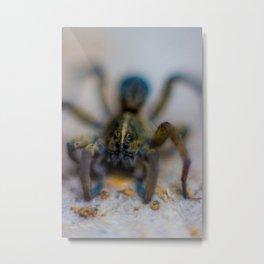 Still spider Metal Print