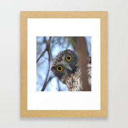 Australian Powerful Owl Framed Art Print