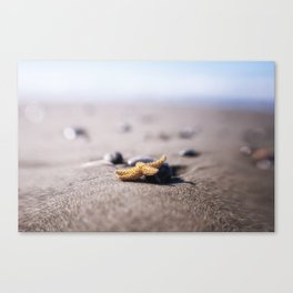 A Tiny Star Canvas Print