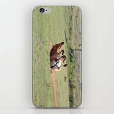 Rolling Horse iPhone & iPod Skin