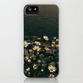 Daisy On The Salt Marsh Trail iPhone Case