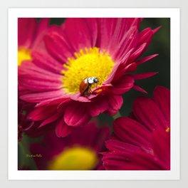 Little Red Ladybug Art Print