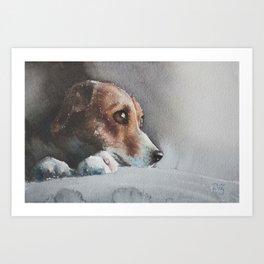 Capella the beagle Art Print