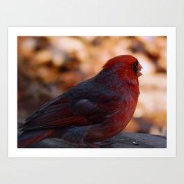 Cardinal shades of gray Art Print