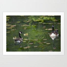 family of birds Art Print