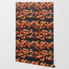 Orange flower fleurs Wallpaper