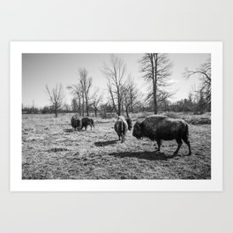 Bison black-and-white Photography | Nature | Animal | Minimalism Art Print