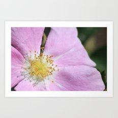 close up on flower Art Print