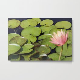 Pretty in Pink Lily Metal Print