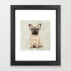 Mr French Bulldog Framed Art Print