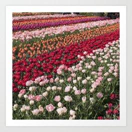 Tulips of Holland (Keukenhof Gardens, The Netherlands) Art Print
