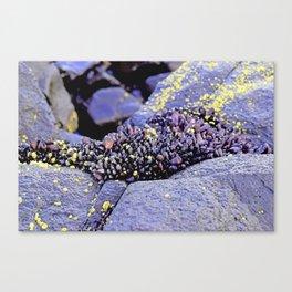 Nature's Secrets Canvas Print