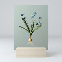 Vintage Scilla Amoena Botanical Illustration on Mint Green Mini Art Print