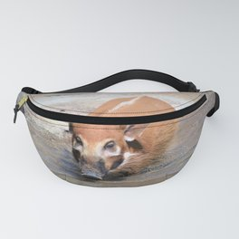 The Red River Hog Fanny Pack