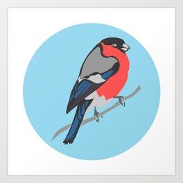 Bull Finch  Art Print
