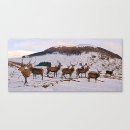 The Gathering of Stags Canvas Print
