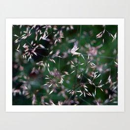 Shimmering Seeds Art Print