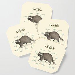 Anatomy of a Raccoon Coaster