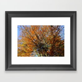 Autumn Forest 2 Framed Art Print