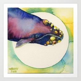 Barnacle BowHead Art Print