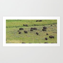 Where the Buffalo/Bison Roam #3 Art Print