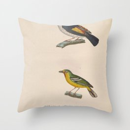 Pied Shrike babbler Chestnut fronted Shrike Babbler5 Throw Pillow