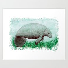 The Manatee ~ Watercolor Painting by Amber Marine Art Print