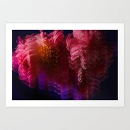 Peonies moving through Time and Space Art Print