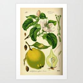 Botanical Print Art Print