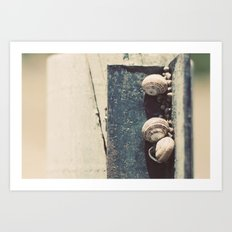 Snail family Art Print
