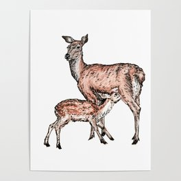 Mom and Baby Deer Poster