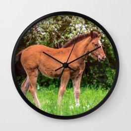 Nice little foal Wall Clock