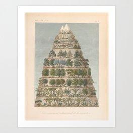 Botanical Elevations Art Print