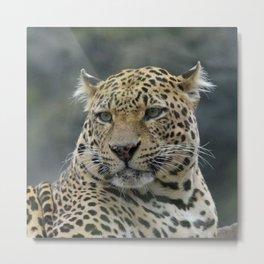 Leopard_20171001_by_JAMFoto Metal Print