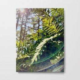 Fern Spores Metal Print