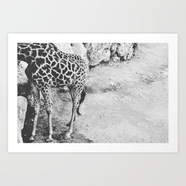 Half Giraffe  Art Print