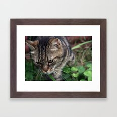Outgoing cat 085 Framed Art Print