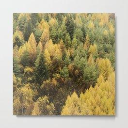 Autumn colour on hillside of trees Metal Print
