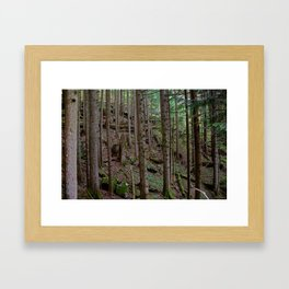 Deep Pine Woods Framed Art Print